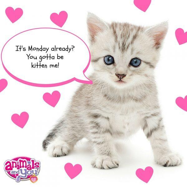 It's Monday already- You gotta be kitten me!