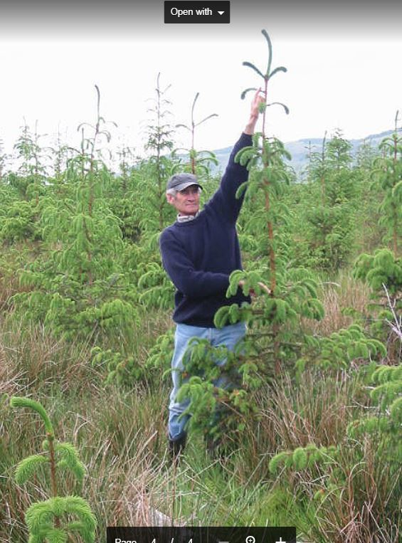 Forester Ian MacKenzie demonstrating the annual growth of some of the Sitka spruce in Kenmore Forest.