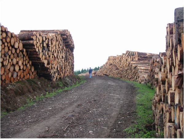 Logs in Kenmore Forest ready for dispatch to the market