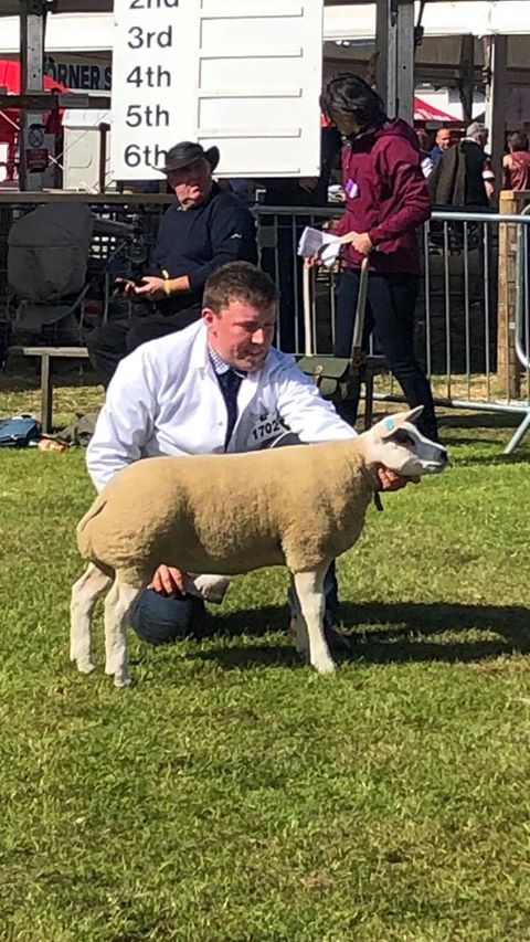 Tiree's Alasdair MacLean in the ring with his reserve female champion Beltes ewe lamb. no_a26RHS01_MacLeanBeltex