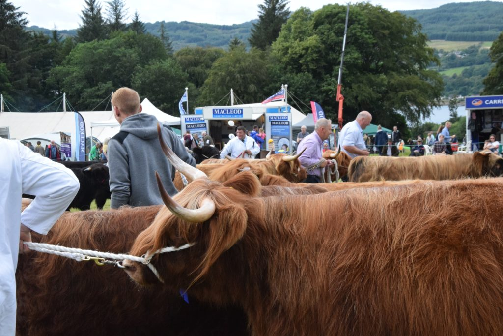 David Renwick, Mid Argyll Agricultural Society president:  'To further improve the Mid Argyll Show field and encourage younger members of the committee to put their ideas into practice.'
