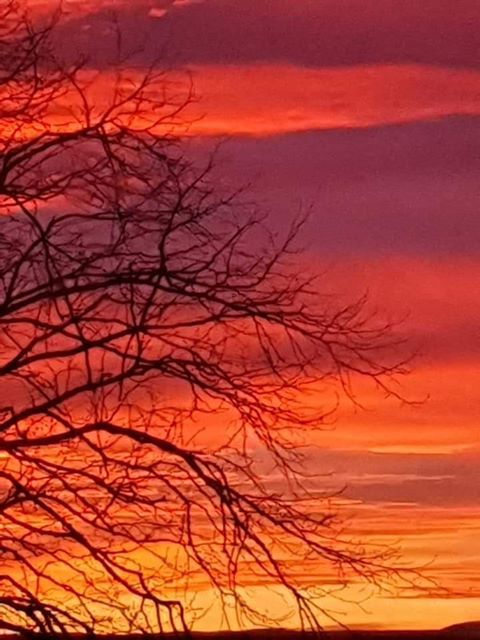 Rich oranges and pinks, taken from her mum's house in Helensburgh