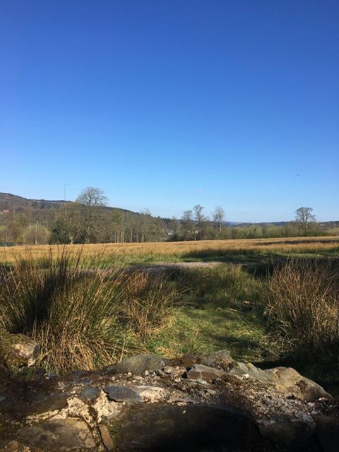 This gorgeous sunny landscape was captured by Donna MacLean on an early Sunday morning walk to Kilmory Castle