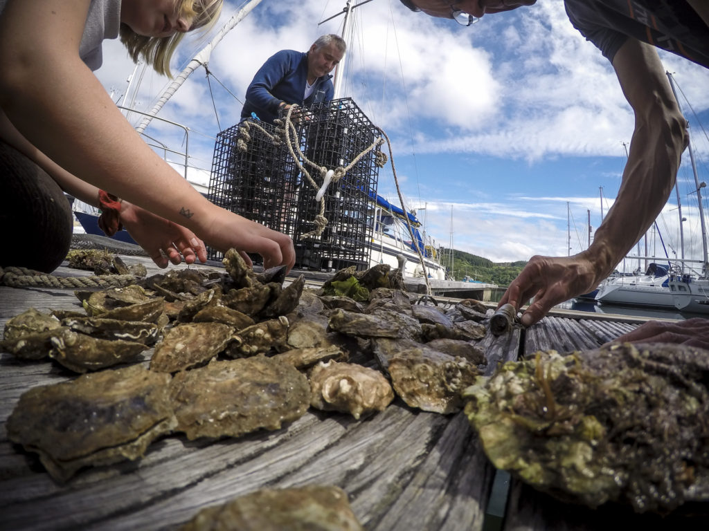 The oysters are placed in the cages to be lowered into Loch Craignish at Ardfern Yacht Centre. Photograph:  Philip Price/Lochvisions