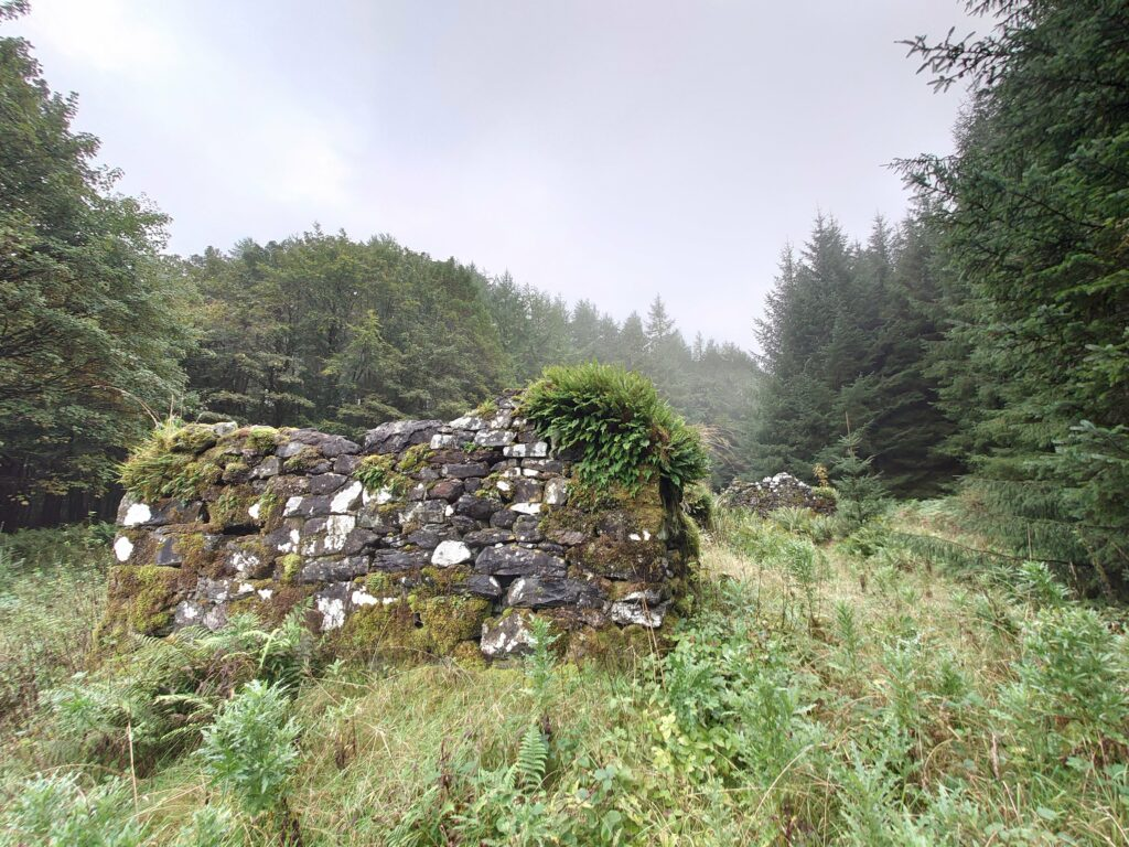 The ruined settlement of Achelach, hidden in the forestry