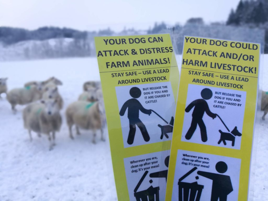 Dog owners warned after sheep attacks across Argyll