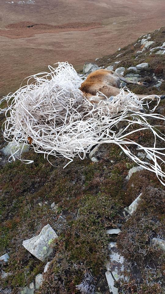 Plastic pollution kills Jura stag