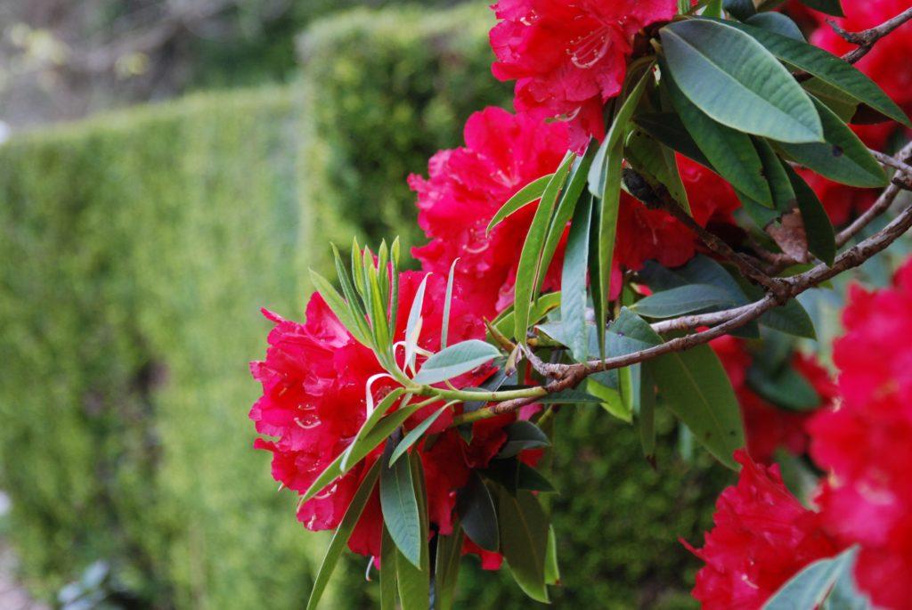 Argyll gardens bloom for 2021