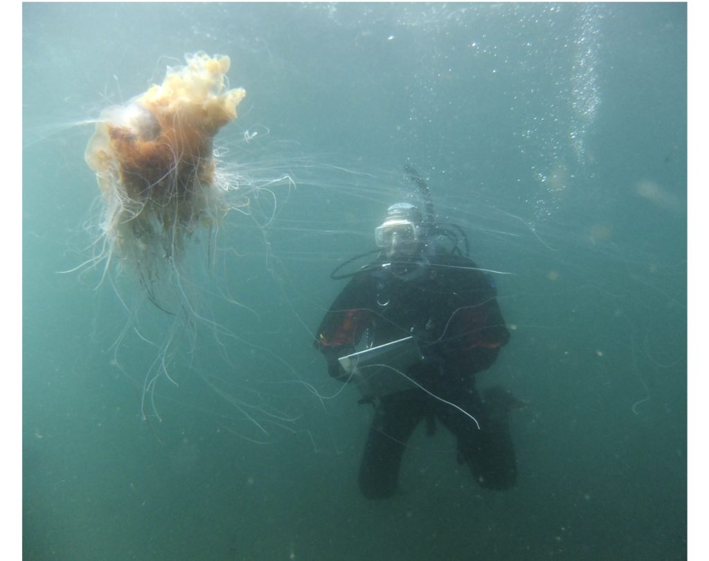 Aquatic art project explores new hope