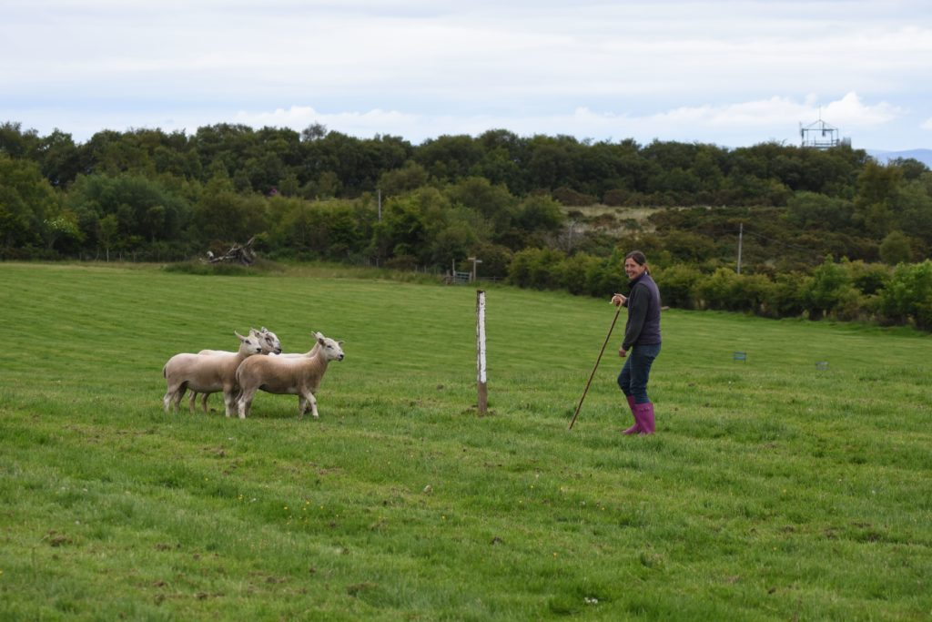 Jen McNeish enjoys a lighter moment with the sheep who resist being penned.