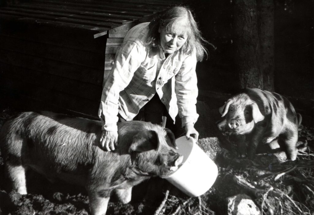 Organic farmer Rosemary Glister of Auchaleffan Farm feeds two of her Oxford Sandy and Black pigs.
