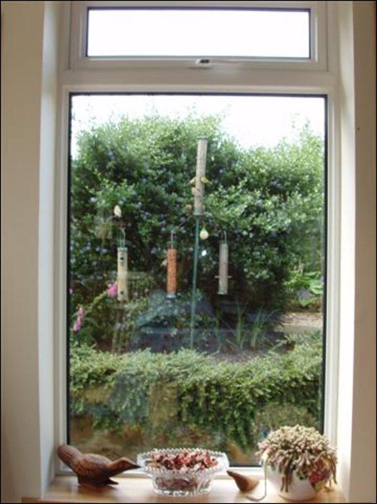 Through the window. Photograph: Angela Cassels