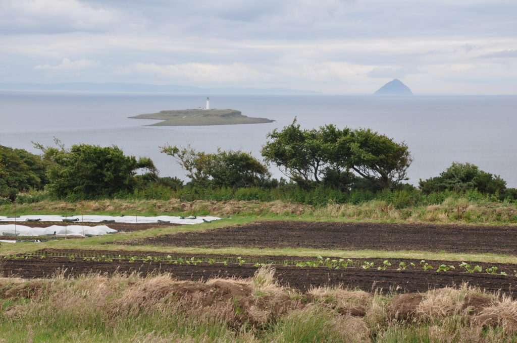The site of the newly planted market garden overlooking Pladda and Ailsa Craig.