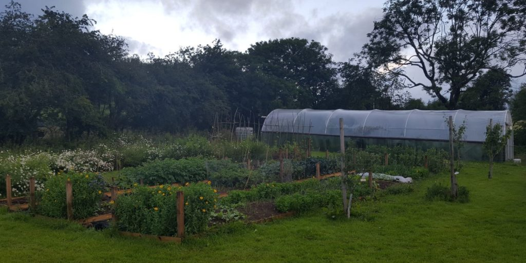 A food producing allotment at the Arran Community Land Initiative.