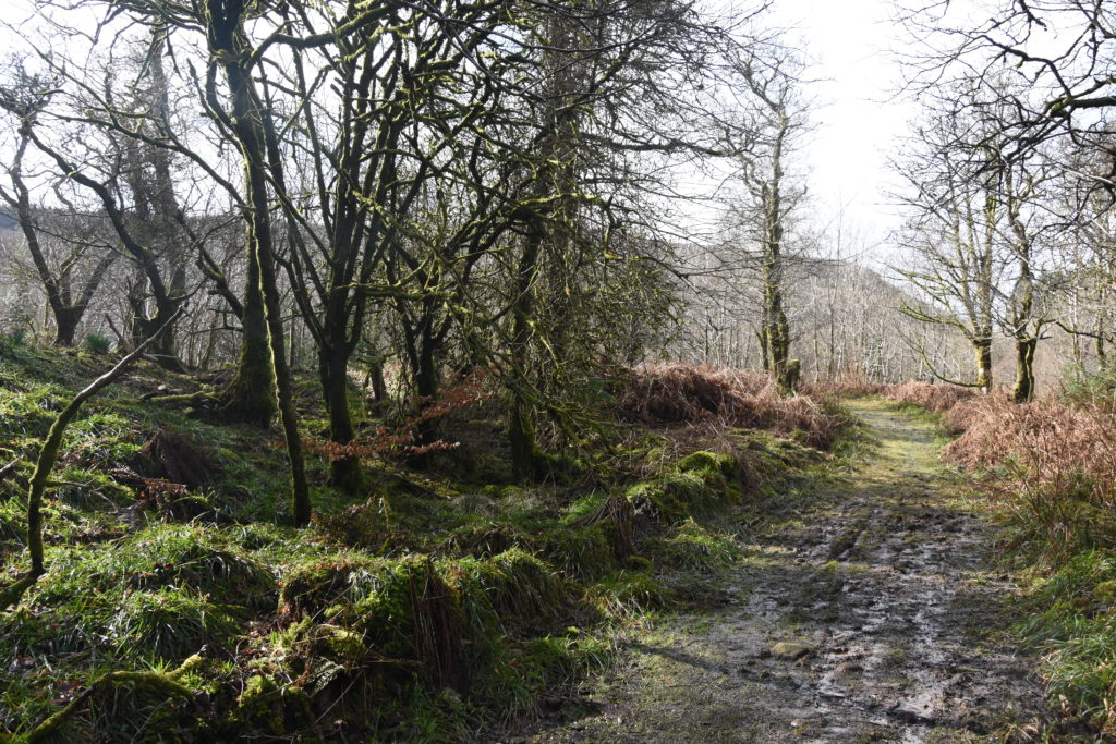 The Dyemill forest where the trails are planned.