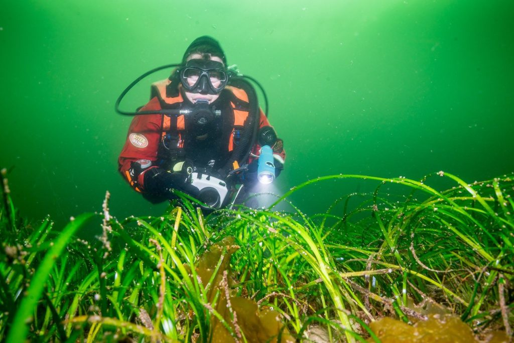 Diver and seagrass ©Paul Kay
