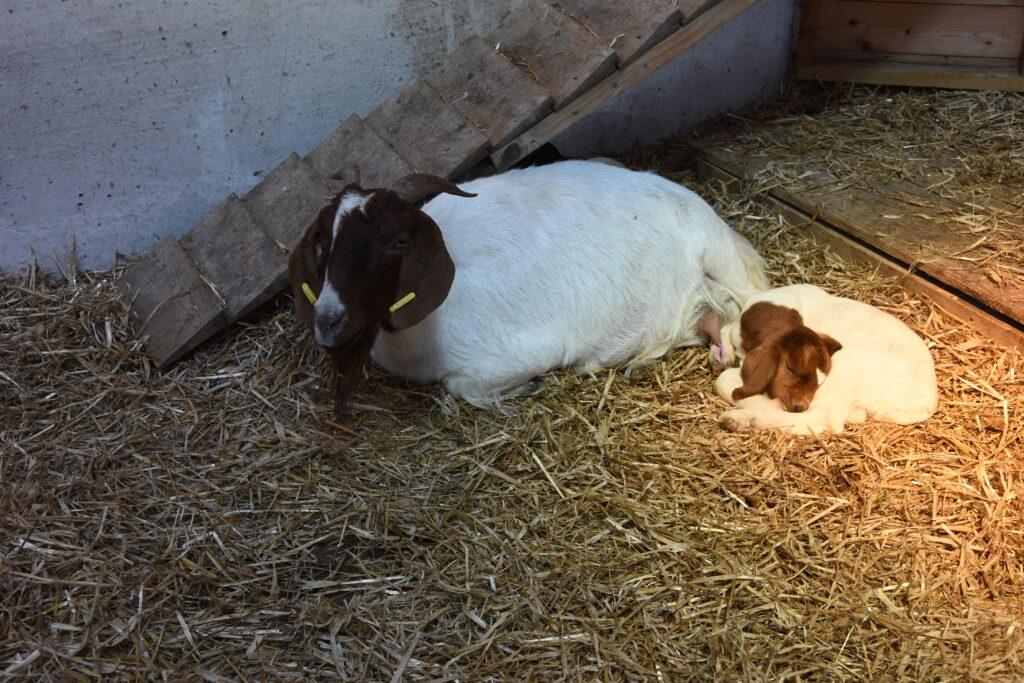 A kid lies beside its mum.