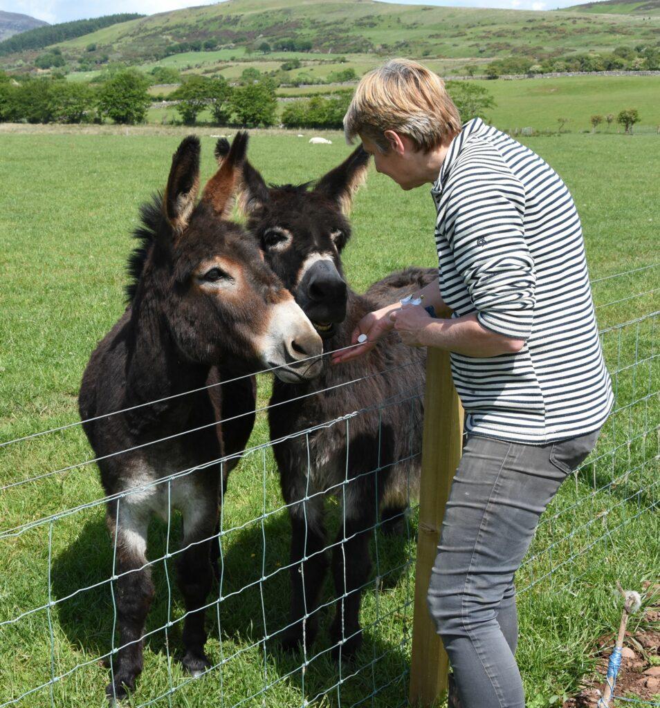 Ailsa feeds the popular donkeys Hamish and Murphy.