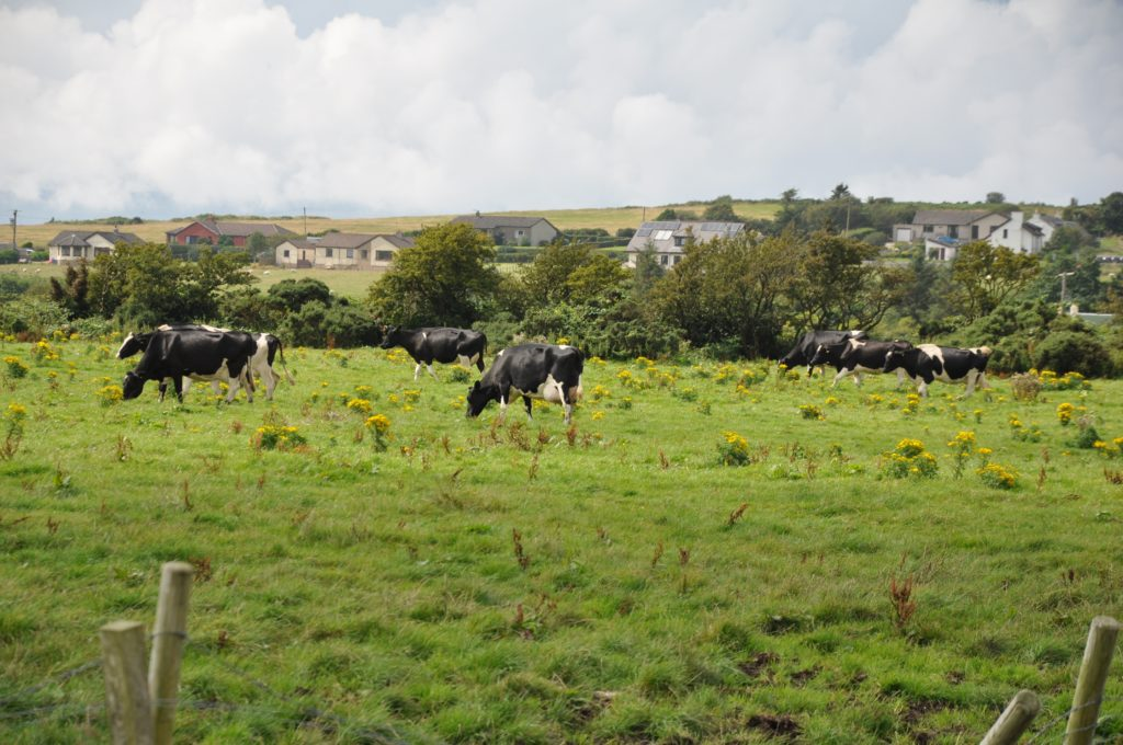 Dairy farming comes to an end on Arran
