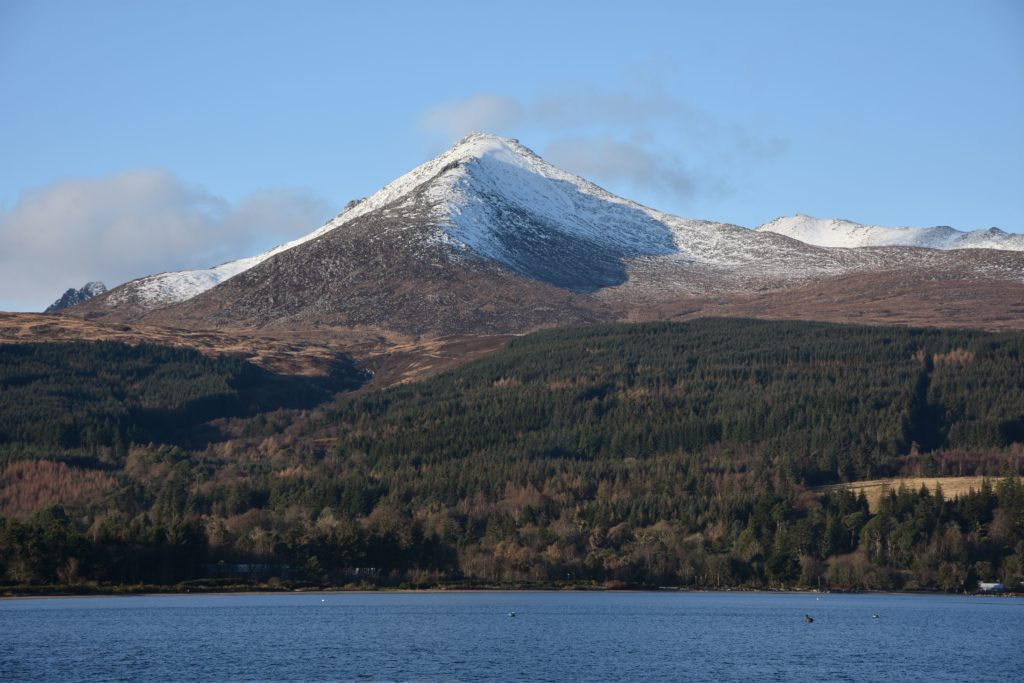 Have your say on the future of Scottish Forestry
