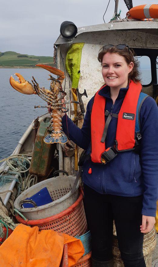Marine life revival in Lamlash Bay