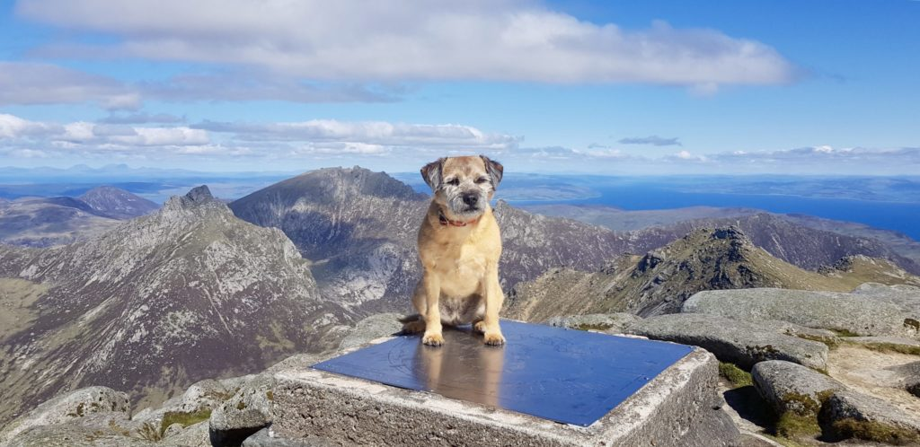 A dog day afternoon on Arran