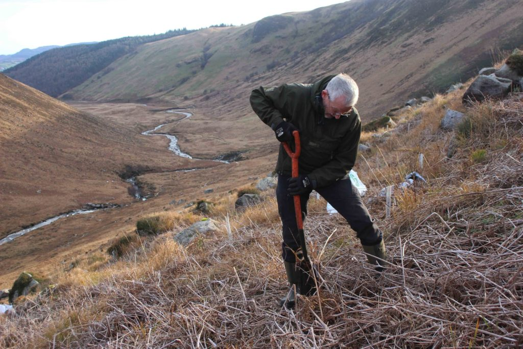 Tree planting resumes in Glen Rosa habitat revival