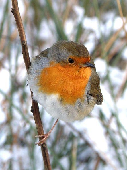 Survey finds the top 10 garden birds on Arran