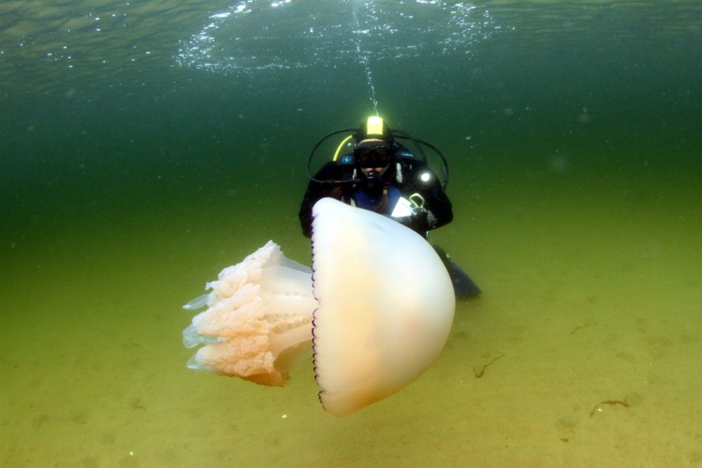 Life in the sea is blooming marvellous
