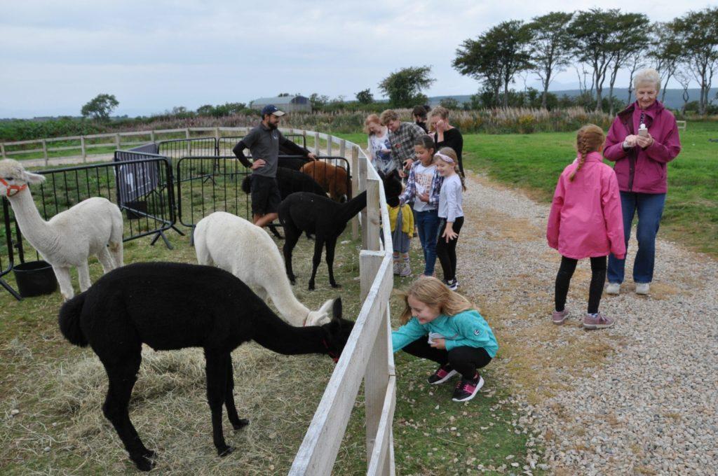 Arran Alpacas play their part in first national open day