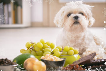 White dog beside grapes and other foods not suitable for pooches