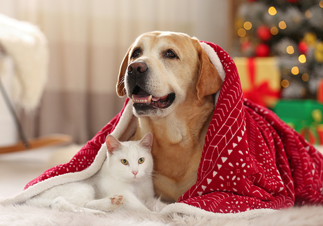 A dog and cat at Christmas time Pic: Shutterstock