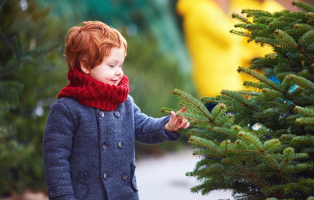 Little boy and real Christmas tree Pic: Shutterstock