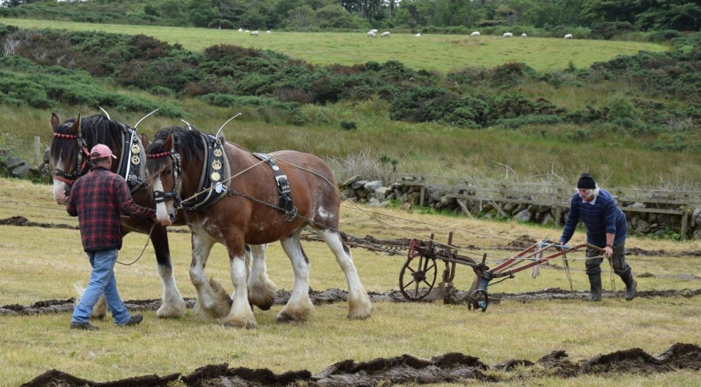 Neil MacPhail, came 2nd in the horses section, and was awarded best gelding and the Largieside Challenge Cup. 50_c31ploughing03_neil macphail