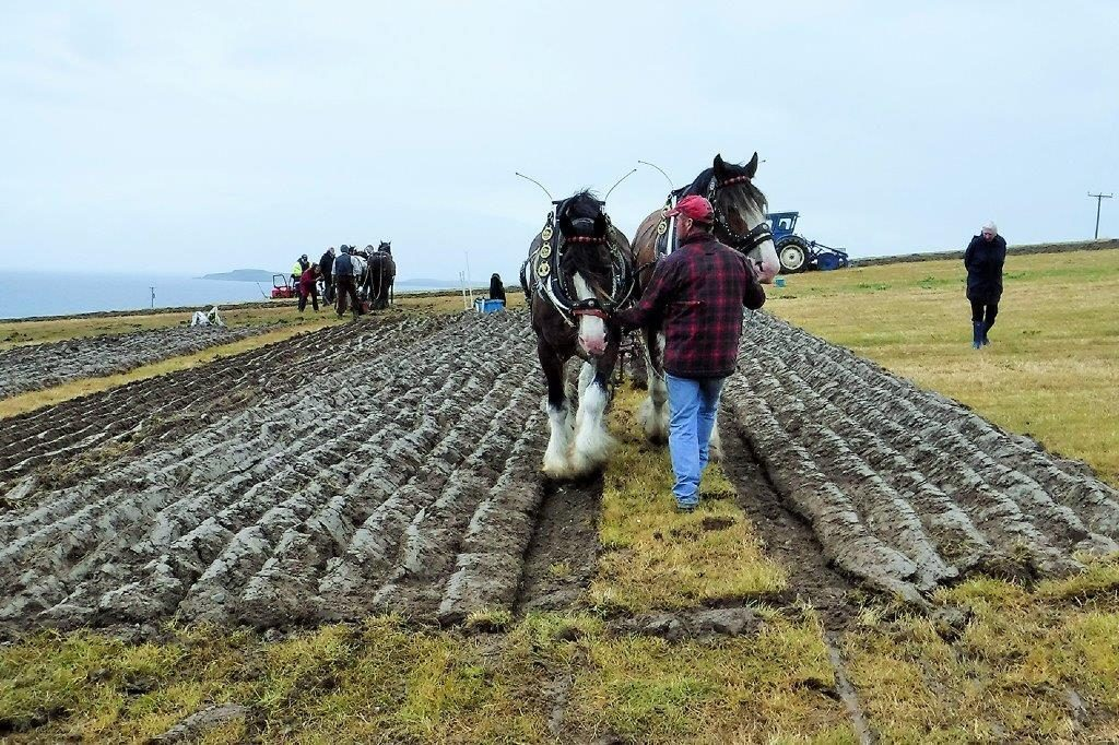 Fine furrows. NO_c31ploughing15_horses ploughing