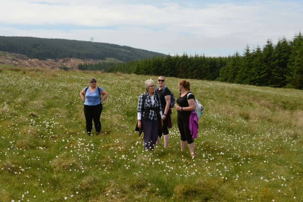 Susan Paterson, Liz Kennedy, Lesley Harvey and Kelly Brown walk through a meadow of cotton grass.