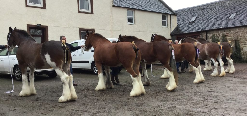It was an impressive class of six in the horse section.