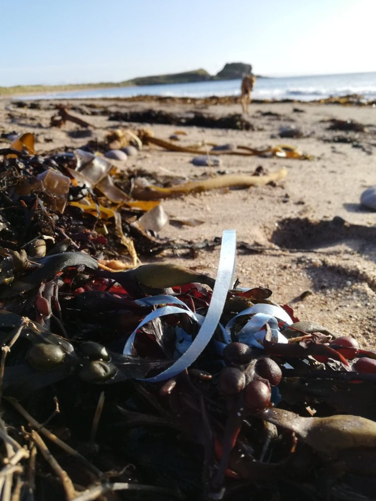 Southend Primary plans to adopt Dunaverty Bay to carry on picking up litter like this.