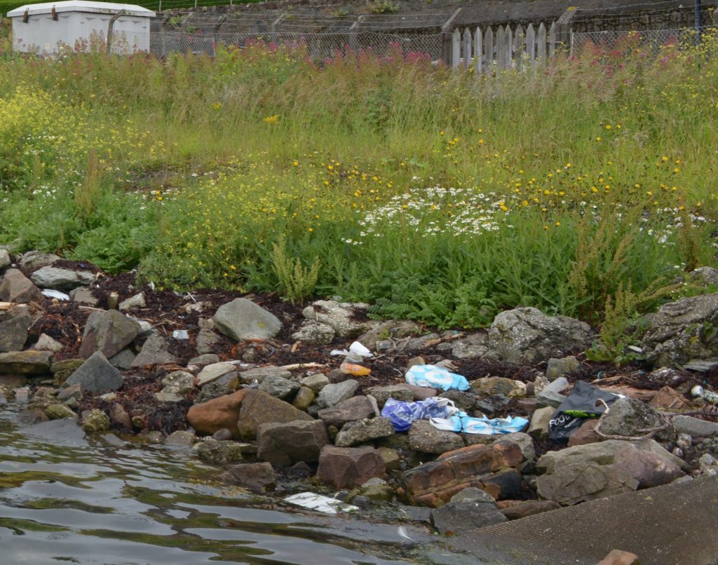 Letter: Unkempt foreshore may attract rats