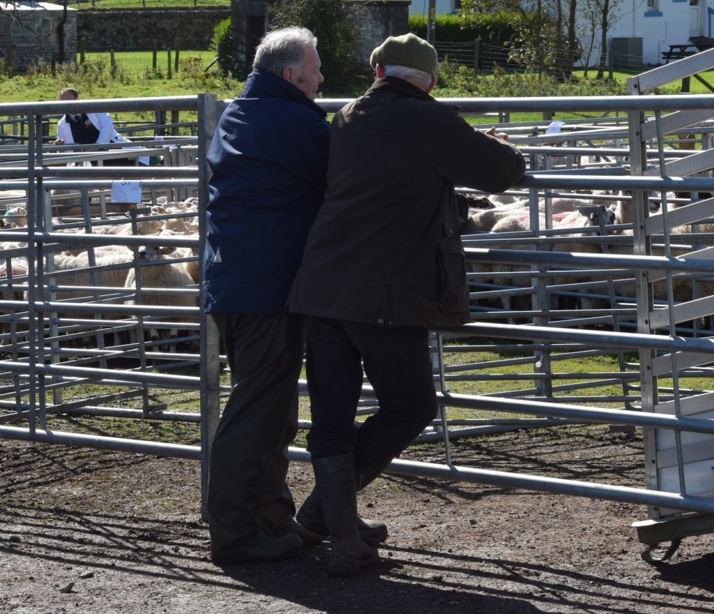 Suffolks top Kintyre sale at £900