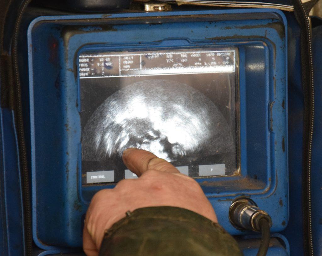 Sheep scanner visits Kintyre
