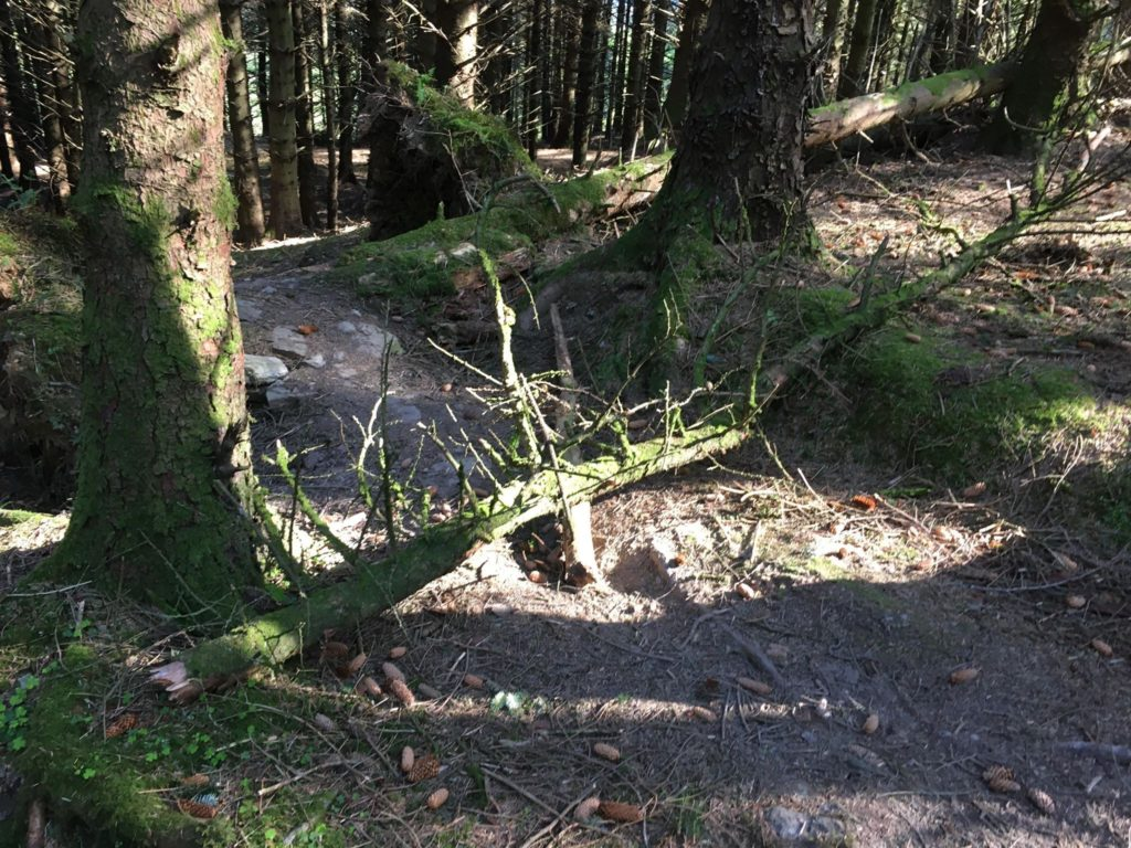 Branches and logs have been placed over several tracks on the hill.