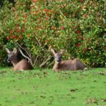 John Anderson, who lives on the Moss Road, sent us this snap and said: 'Roe deer twins born this year having a wee sunbathe in the garden. Loads of berries too so maybe a stiff winter ahead.'