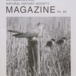 The autumn 2020 edition of the Kintyre Magazine features a cuckoo and stonechats at Balnabraid, photographed by James R MacDonald on Easter Monday 2020.