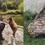 Katrina MacDonald and her dog Rogan, left, and the turkey tail mushroom which Ian McVicar found in a garden in Southend.