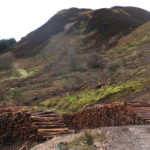 Tree-felling operations on Beinn Ghuilean are now complete.
