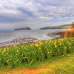 Photographer Aileen Gillies took this springtime snap during a visit to Campbeltown last week.
