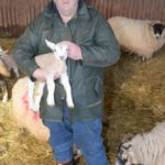 John Armour in one of his sheds with a young lamb.
