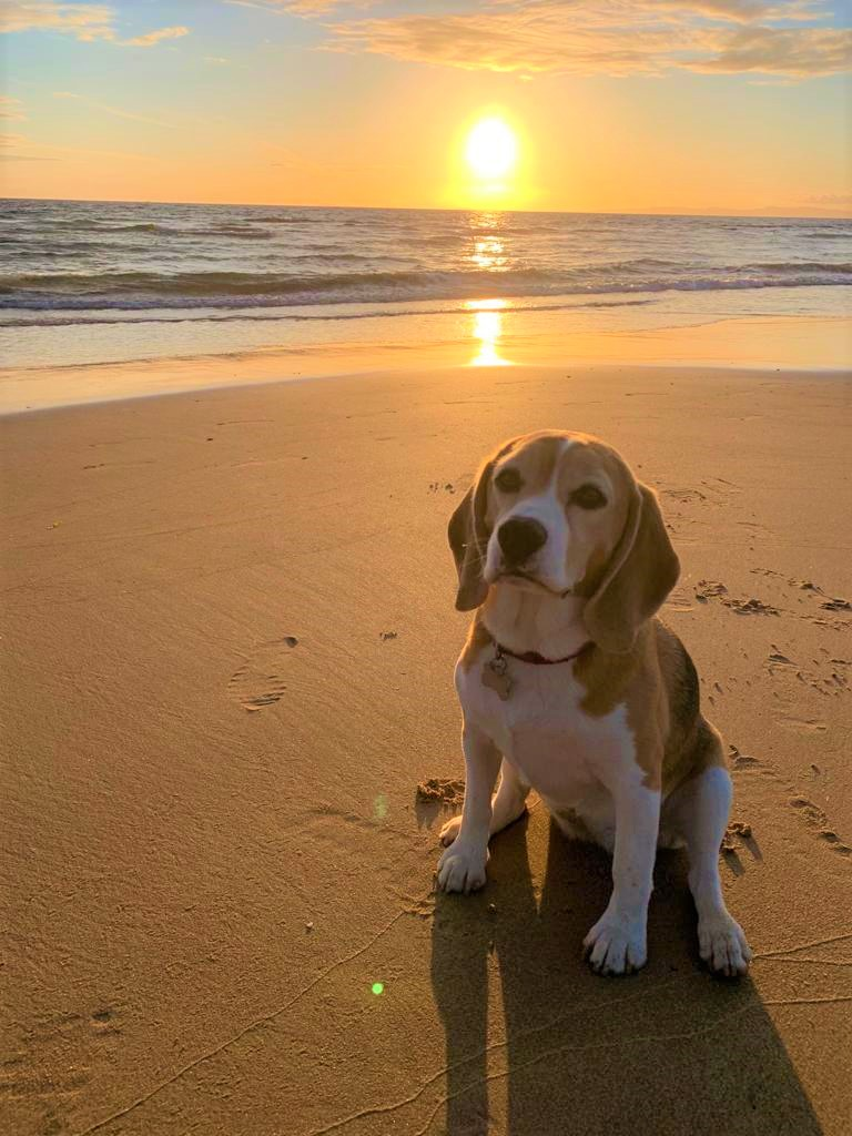 This week's photograph shows Jura the beagle sitting on Westport beach as the sun sets not far from her namesake island.