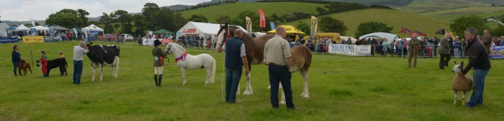 The champion of champions display at the 2016 150th Kintyre Show.